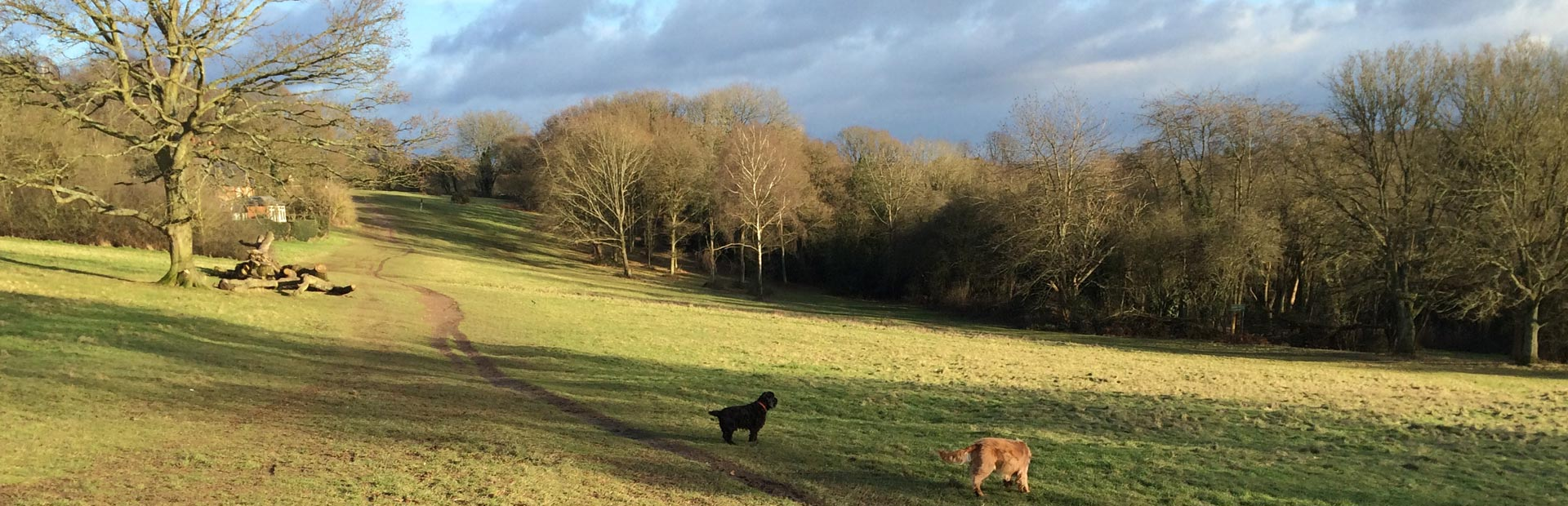 Buddy and Cracker walking at Chorleywood Common